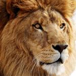 MacOS X Lion(4) Lion の新規インストール
